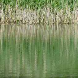 Reflections of rushes