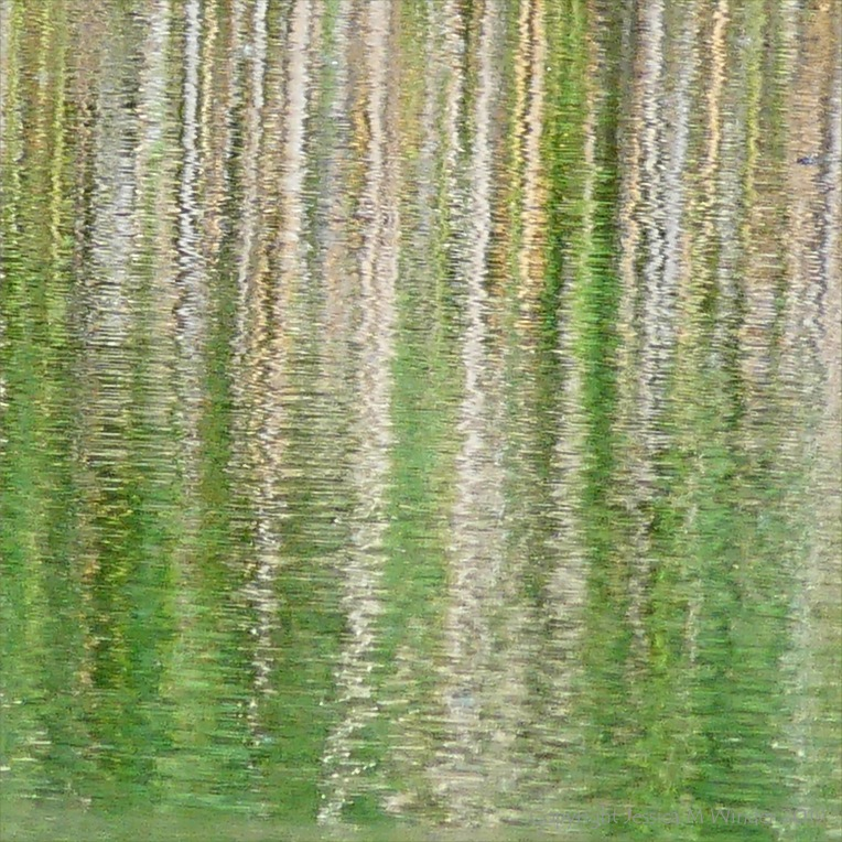 Reflections of lakeside reeds