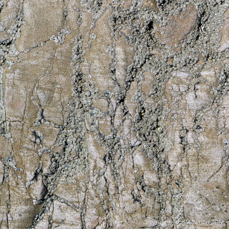 Seashore limestone rock pattern and texture