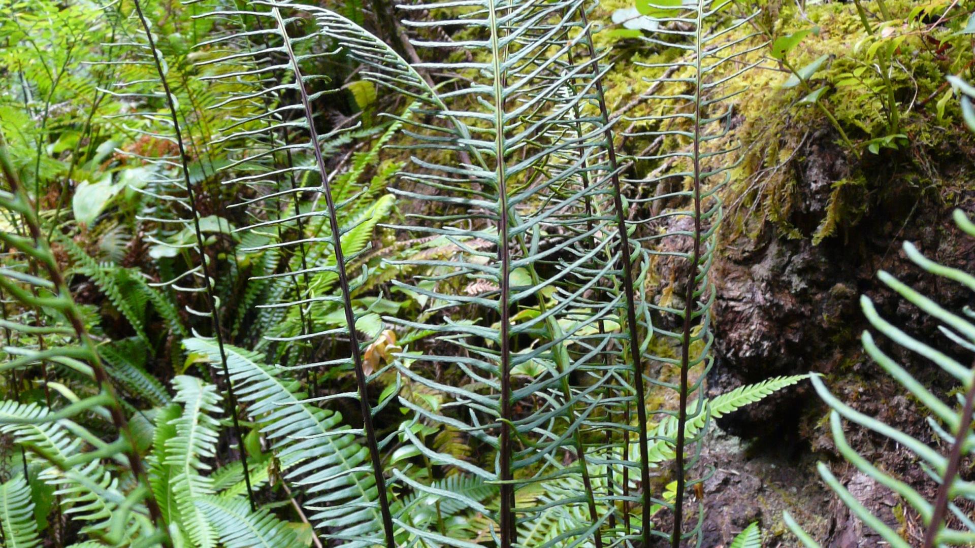 Ferns in the wild
