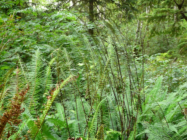 Ferns in the wold