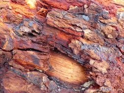 Detail of bark on driftwood
