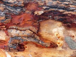 Detail of bark on driftwood