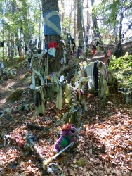 Votive offerings on trees at a sacred site