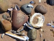 Shells and pebbles on the beach