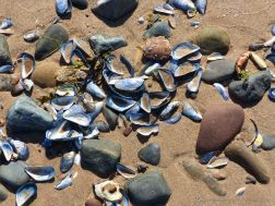Sea shells and pebbles on the seashore