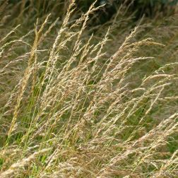 Drying grasses in the English countryside