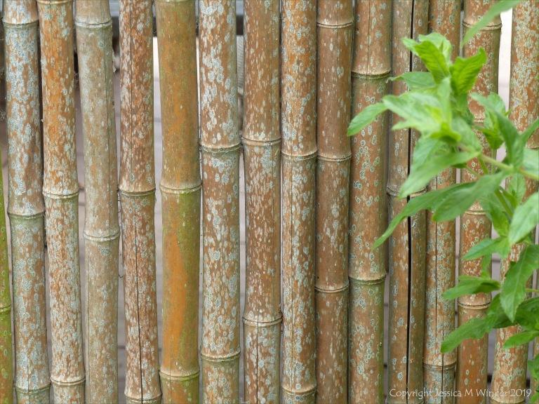 Bambo canes