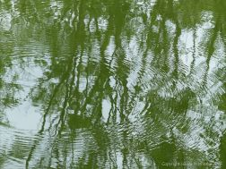 Leaves reflected in water