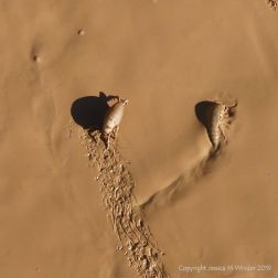 Orange mud on Rhossili beach with sand hoppers