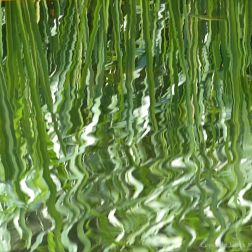 Reflections of pond-side reeds