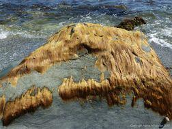 Seaweed like golden hair on rocks