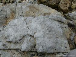 Fossils in Carboniferous Limestone