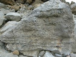 Fossils in Carboniferous Limestone
