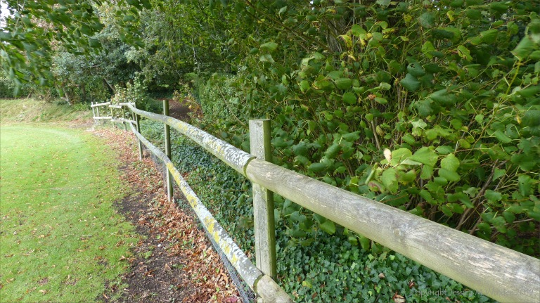 wooden boundary railings with lichen
