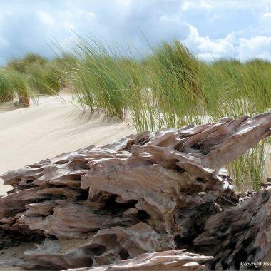 Driftwood on sand with marram grass
