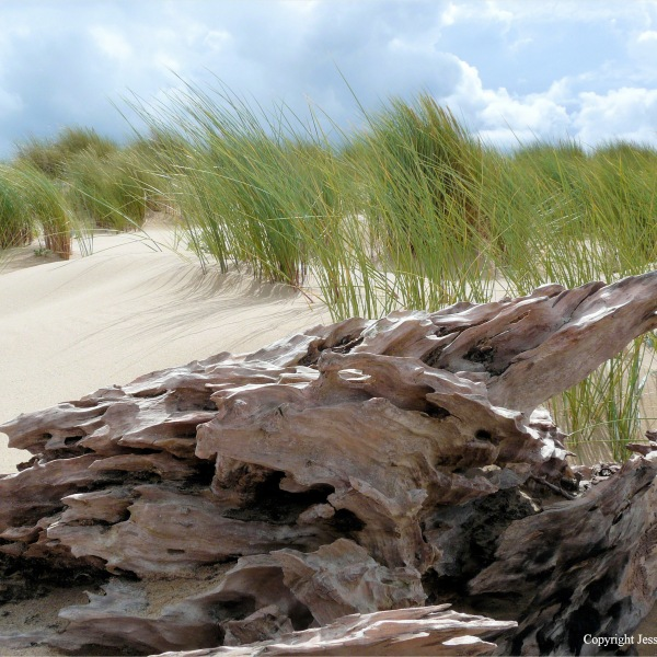 Driftwood on sand with marram grass