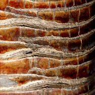Bark colour, pattern and texture