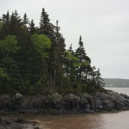 Trees growing on coastal rock at Irving Nature Park in New Brunswick