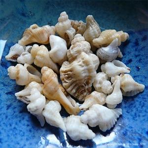Sting Winkle Shells