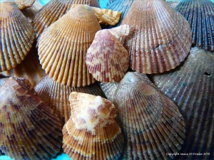 Variegated Scallops