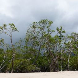 Rainforest on the edge of Kewarra Beach in Queensland