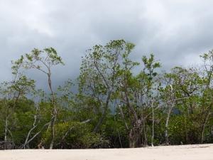 Rainforest on the edge of Kewarra Beach in Queensland