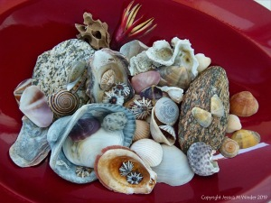 Assorted Cairns seashells