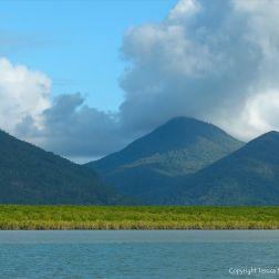 View from Mulgrave River in Queensland