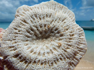 Coral at Normanby Island in Queensland