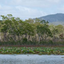 Trees on the banks of the Mareeba Wetlands in Queensland Australia