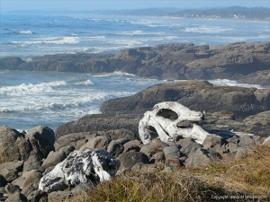 Driftwood on the rocky shore at Yachats