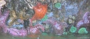 Seashore creatures at Yachats