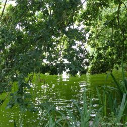 Oak tree branches overhanging a lake