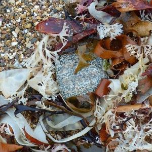 Multicoloured seaweeds on the strandline