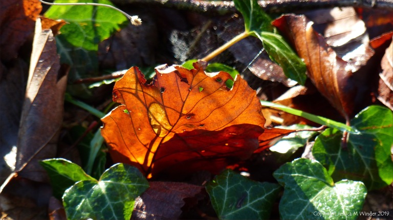 Light shining through a dead leaf