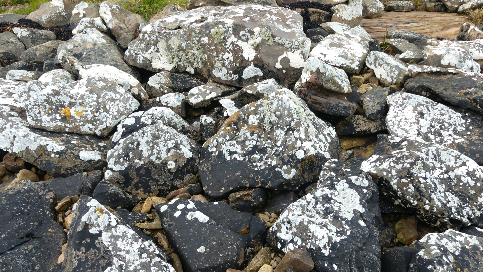 Lichen on seashore rocks