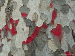 Red paint on bark