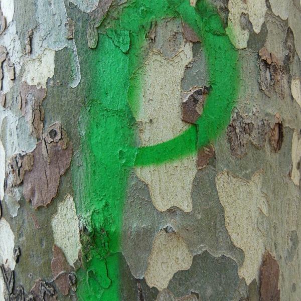 Green spray-paint graffiti on plane tree bark