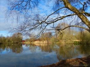 Winter lakeside reflections
