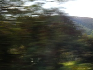 Rural view from a moving train