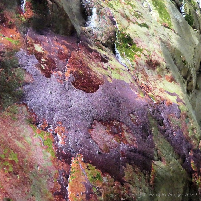 Colourful epibiota on limestone cave rock surface