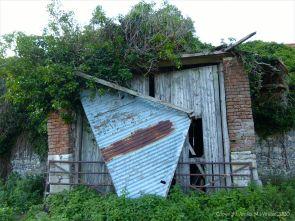 Ivy clad flint and brick walls of an old barn