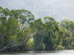 Hazy evening view along the banks of the Mulgrave River