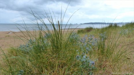 View of Swansea Bay from the dunes