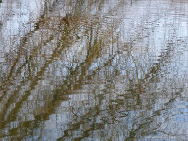 Reflections of branches on water