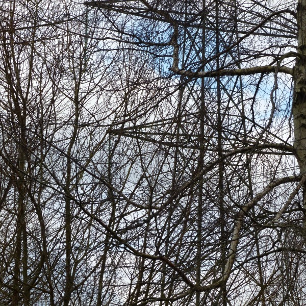 Network of bare branches with metal structure of a pylon