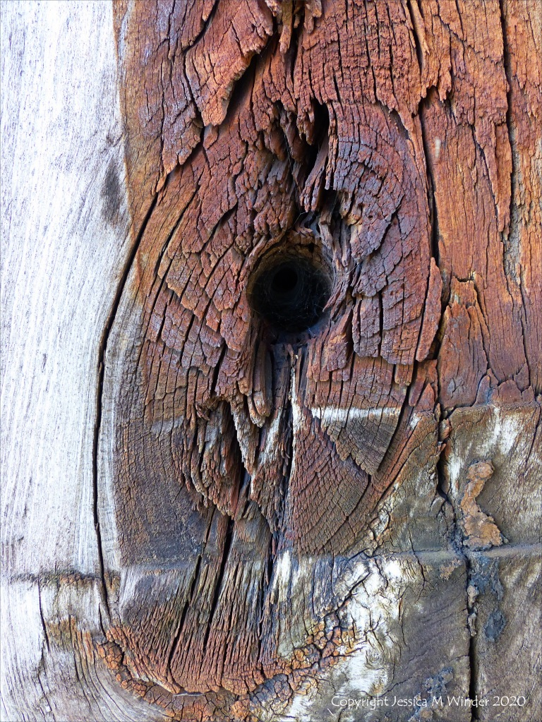 Wood knot in rust-stained timber