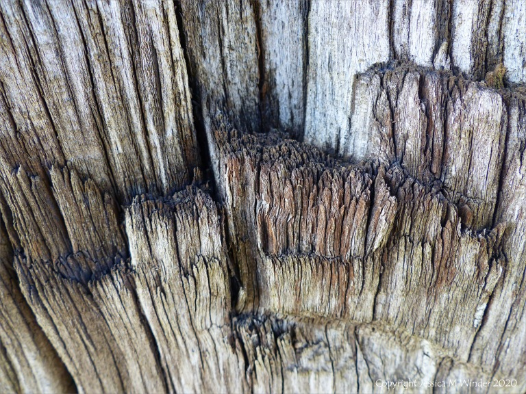 Crushed woodgrain on an old railway sleeper