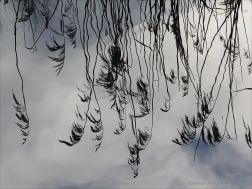 Reflections of reeds on water